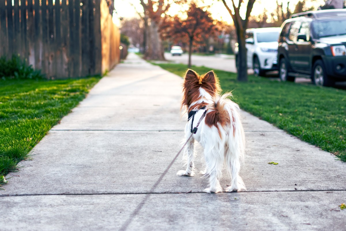 Tail wagging isn't always a sign of happiness, and therefore, there's more to the behavior than we may think.