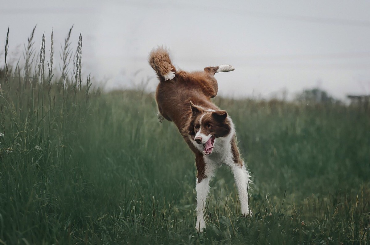 OK, this is not real air humping, but you get the idea!
