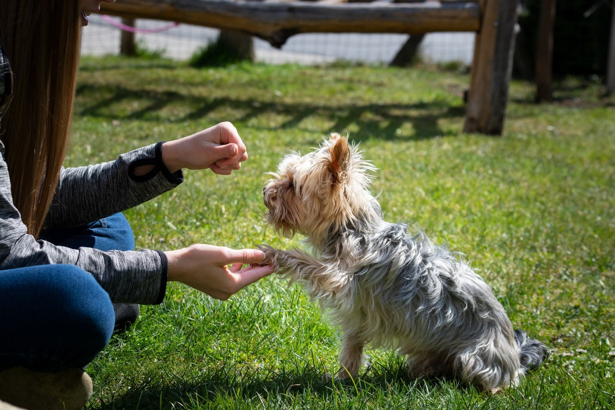Pawing behavior in dogs often gains a strong history of reinforcement once trained.