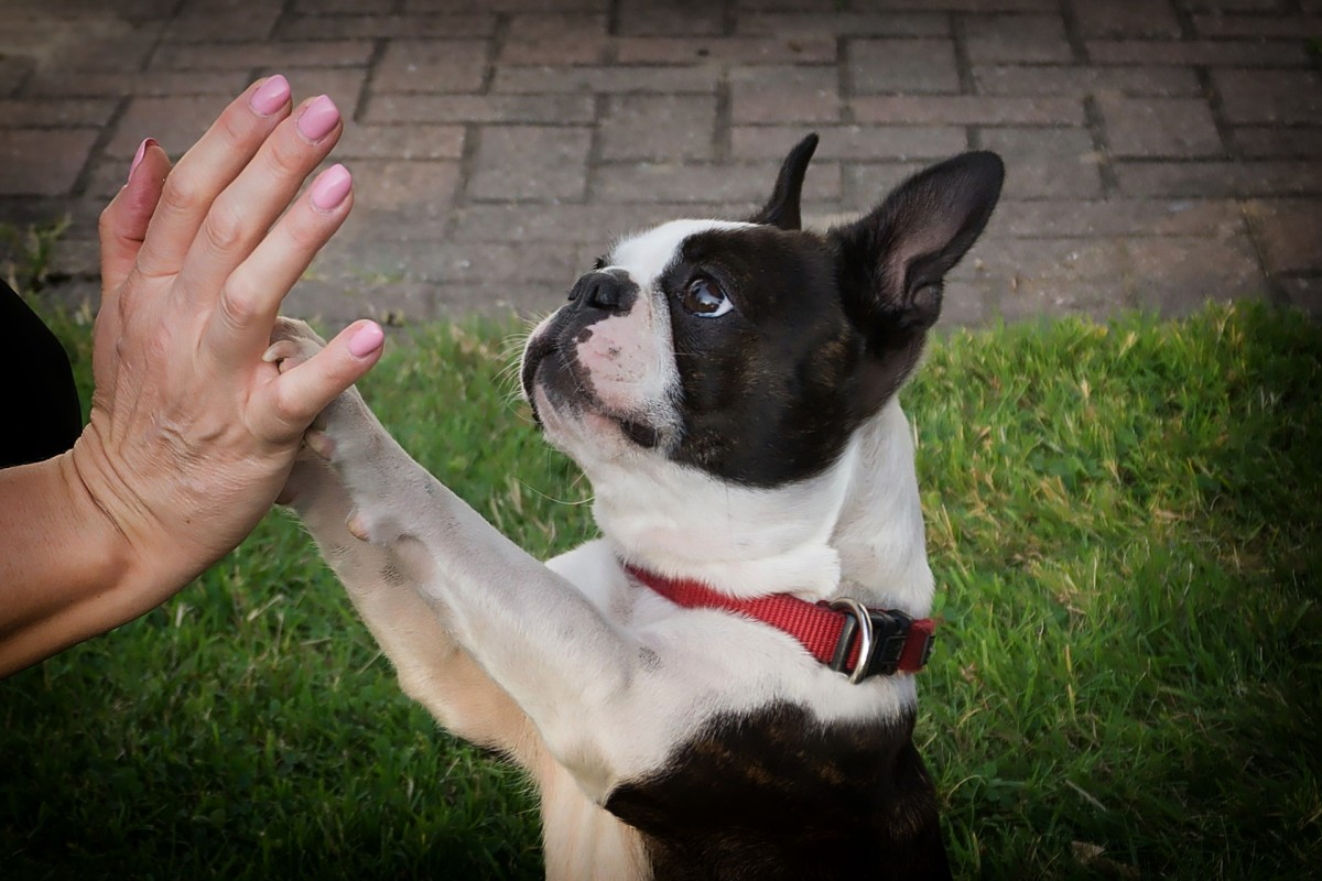 Social pawing behaviors in dogs is an easy way for dogs to get attention, either to ask for something they want or to initiate play.