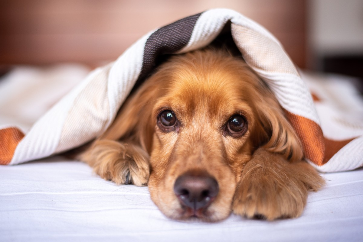 Certain types of emotions such as fear, anxiety and excitement can cause dogs to release urine.
