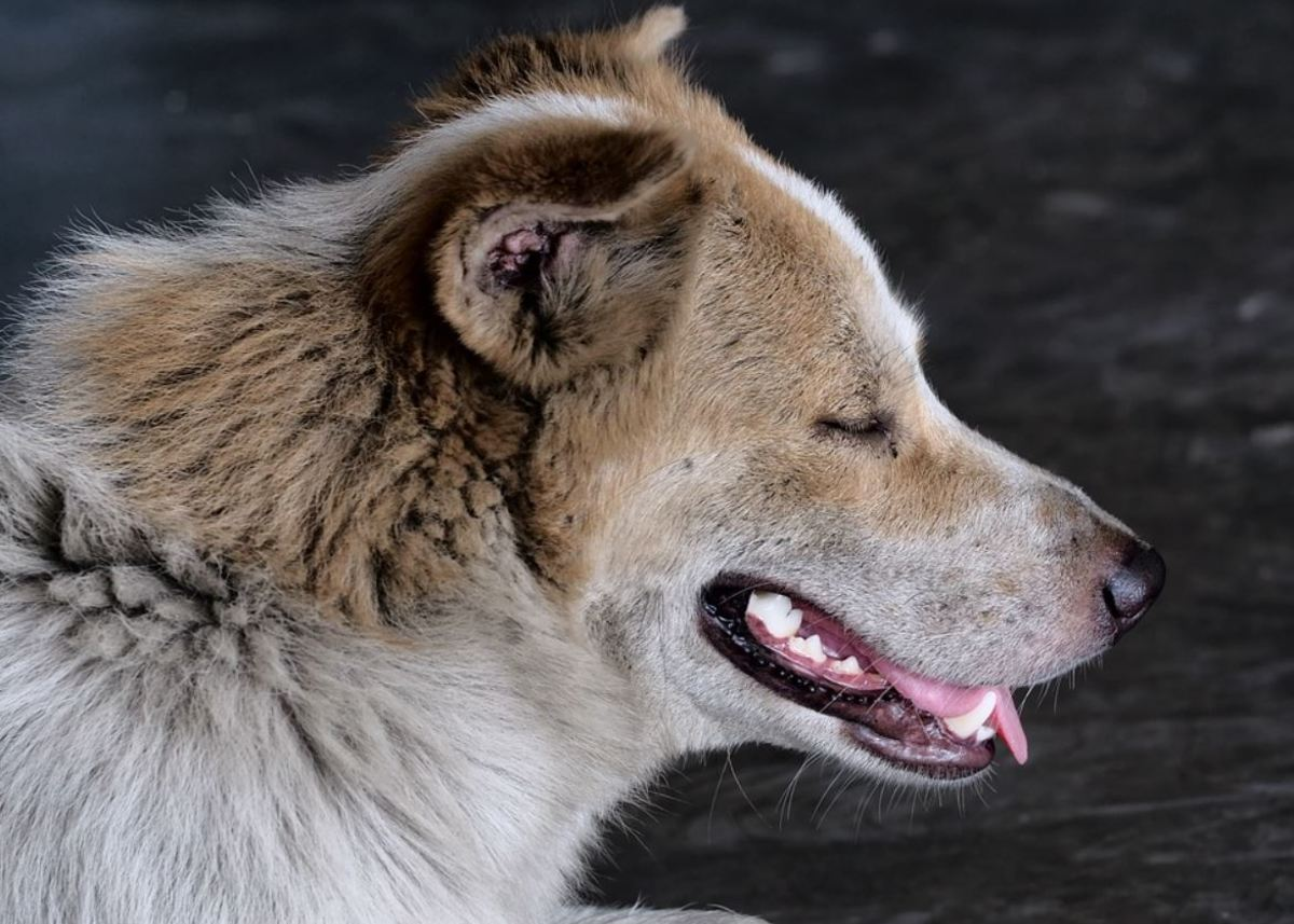 A brittle coat in dogs can be due to a variety of health issues
