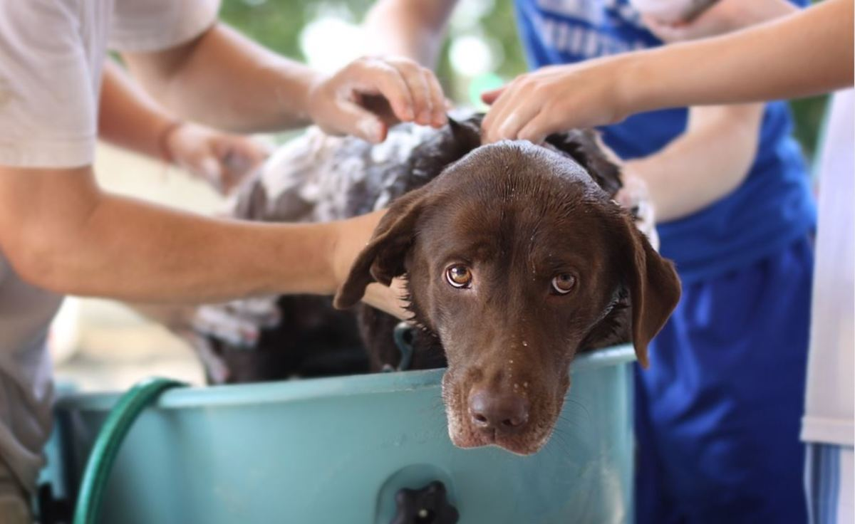 Regular bathing will help maintain a dog's coat clean and fresh