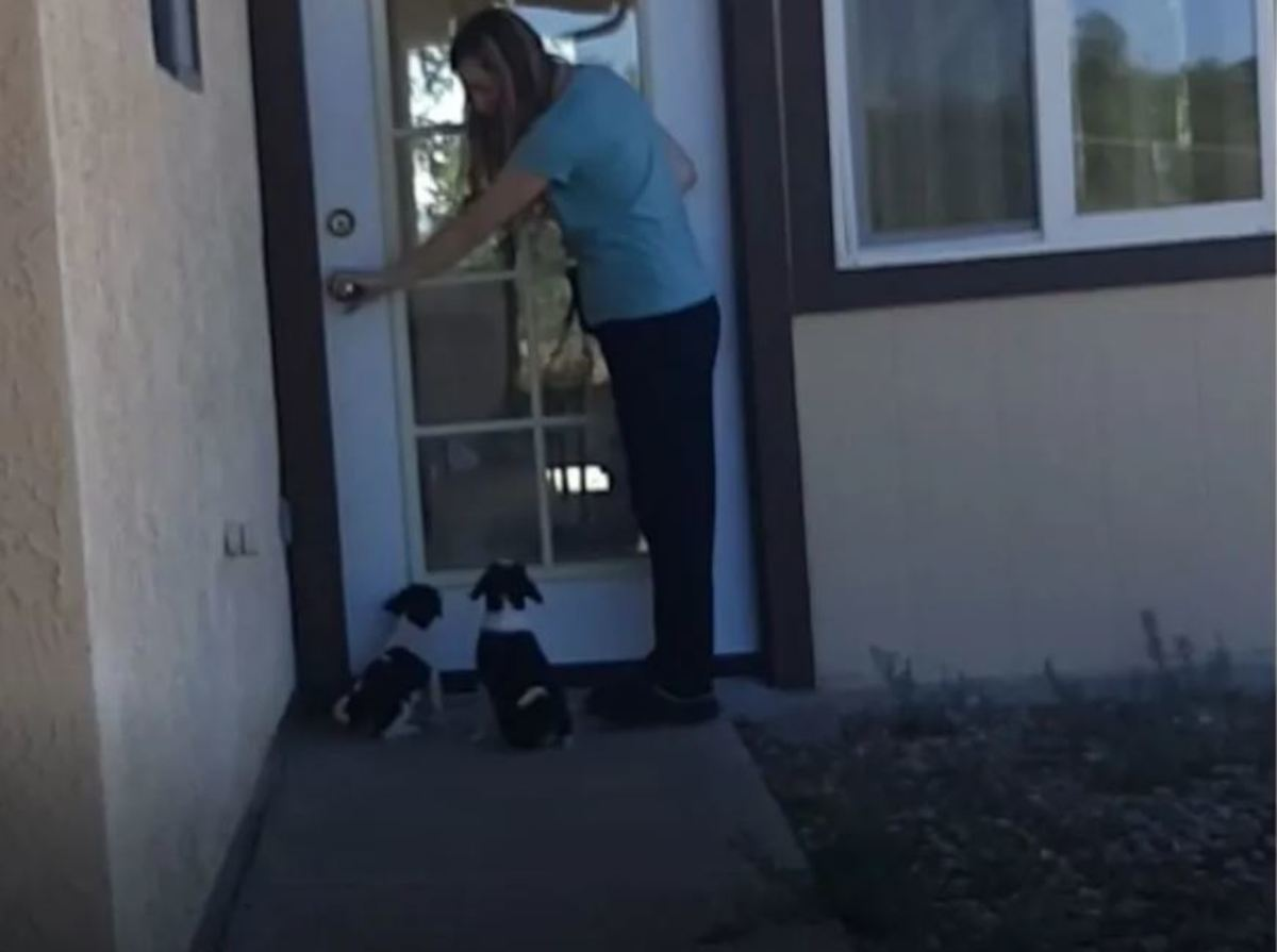 Two 8-week-old puppies learning to sit when I touch the door knob.