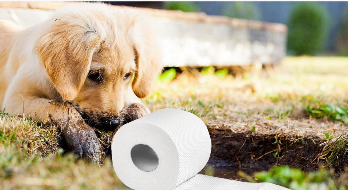 IOften, puppies and young dogs eat tissues because they are curious or bored.