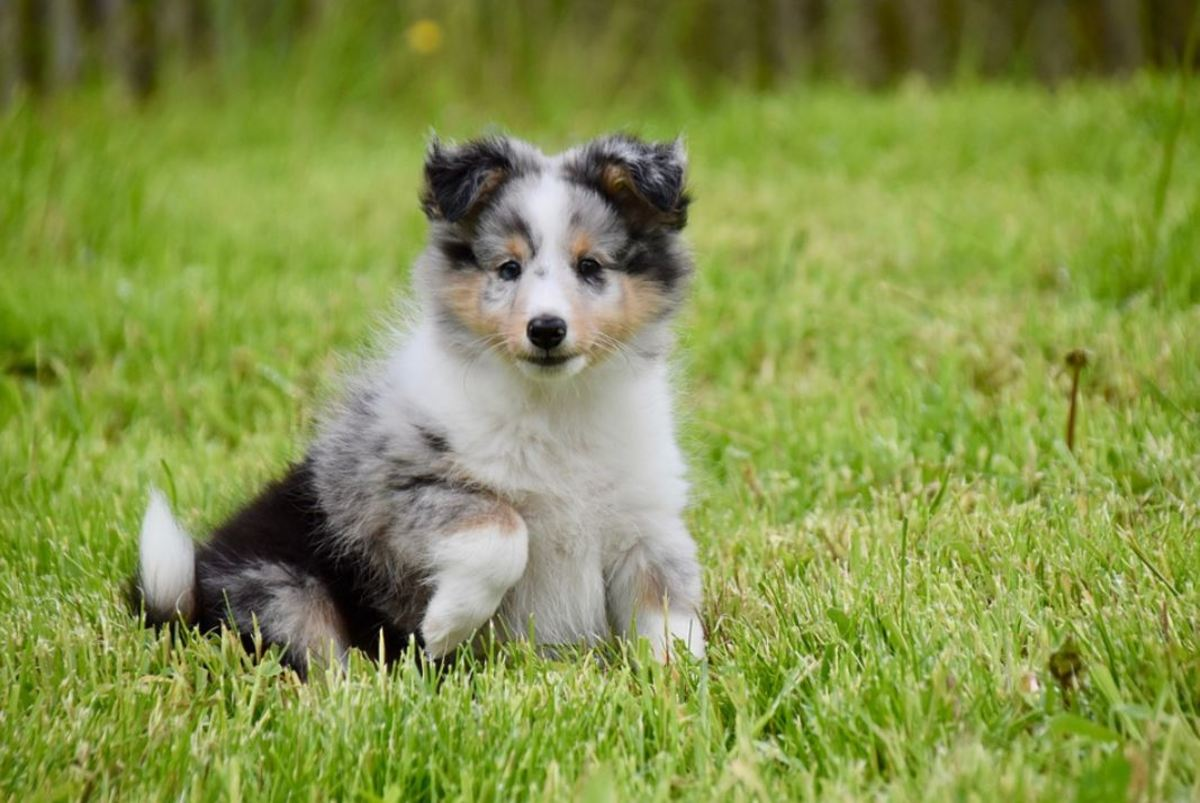 Distracting your puppy from the grass and offering fun toys or other forms of play can help reduce its attractiveness.