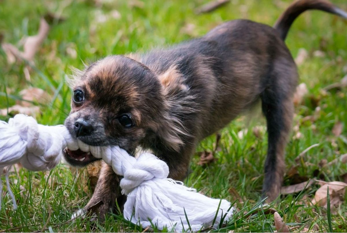 Redirect your puppy from your feet to toys and make sure you move them a lot!