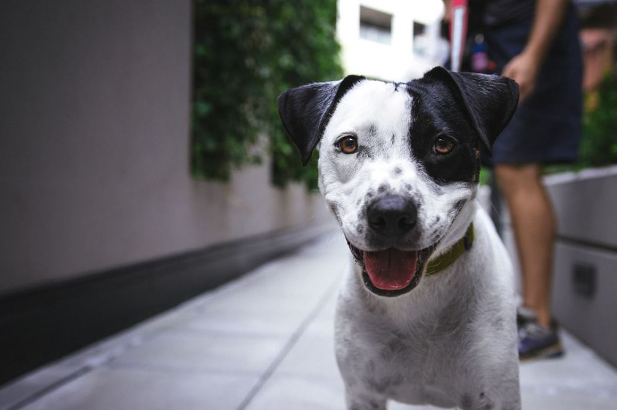 Extroverted dogs are social butterflies who enjoy being in the center of attention.