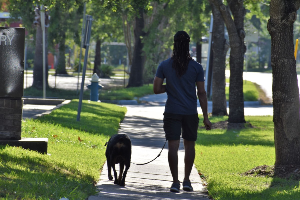 Some dogs may stop walking just for because they're craving some interaction.